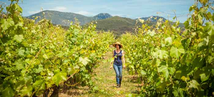 Languedoc: value for money